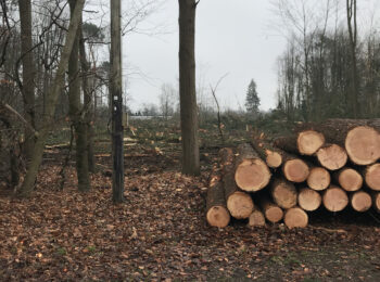 Illegale Abholzung Quickborn Birkenweg